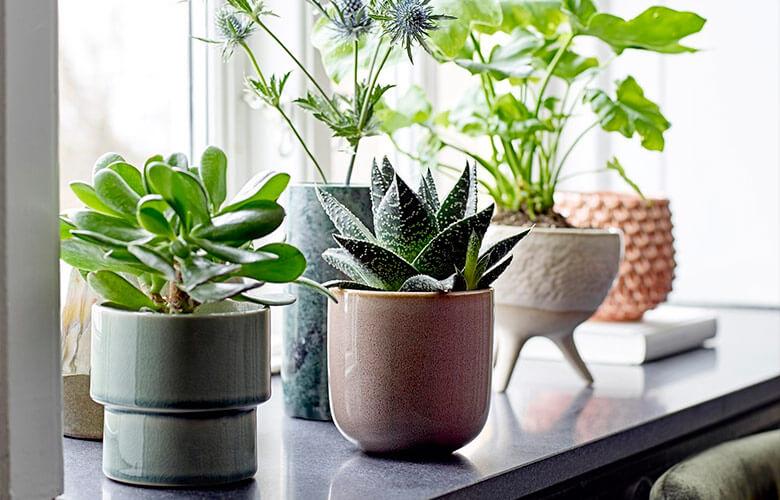 Tipos de Vasos para Plantas   westwing.com.br