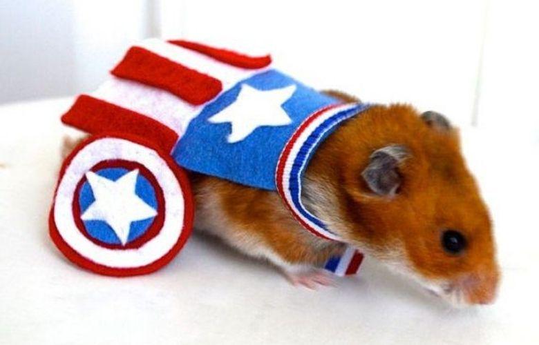 Roupas para Hamster | westwing.com.br
