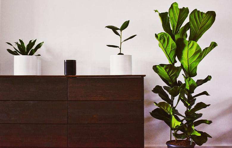 Ficus | westwing.com.br