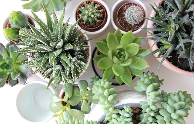 plantação de suculentas em vaso de diferentes tipos e formas