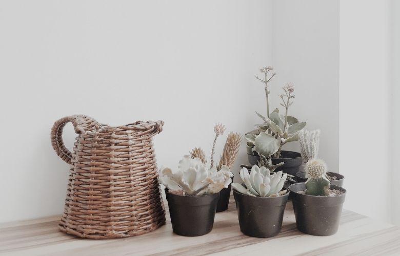 Vasos de plástico e vasos de vime com planta