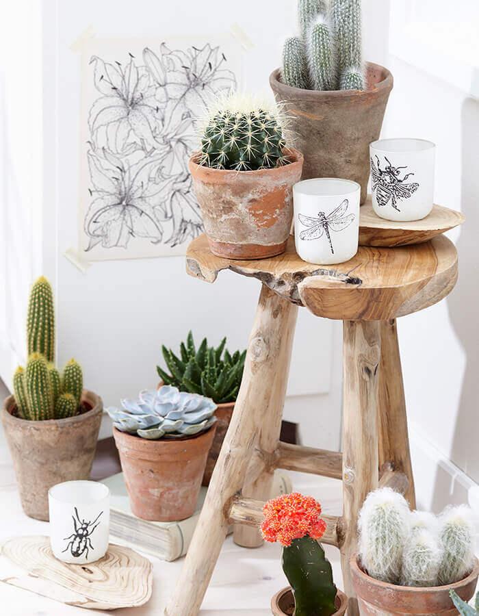 Como Plantar Suculentas, vaso com cactos e suculentas | Westwing.com.br