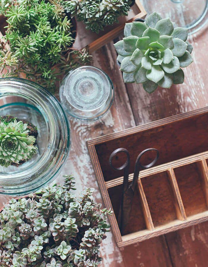 Passo a passo para Plantar Suculentas, vasos de vidro com suculentas | Westwing.com.br