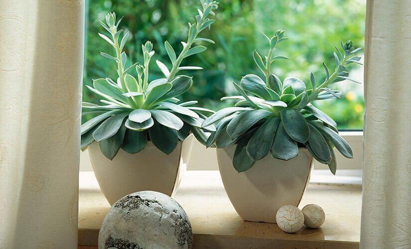 Como cultivar suculentas em casa, vasos com duas suculentas na janela | Westwing.com.br