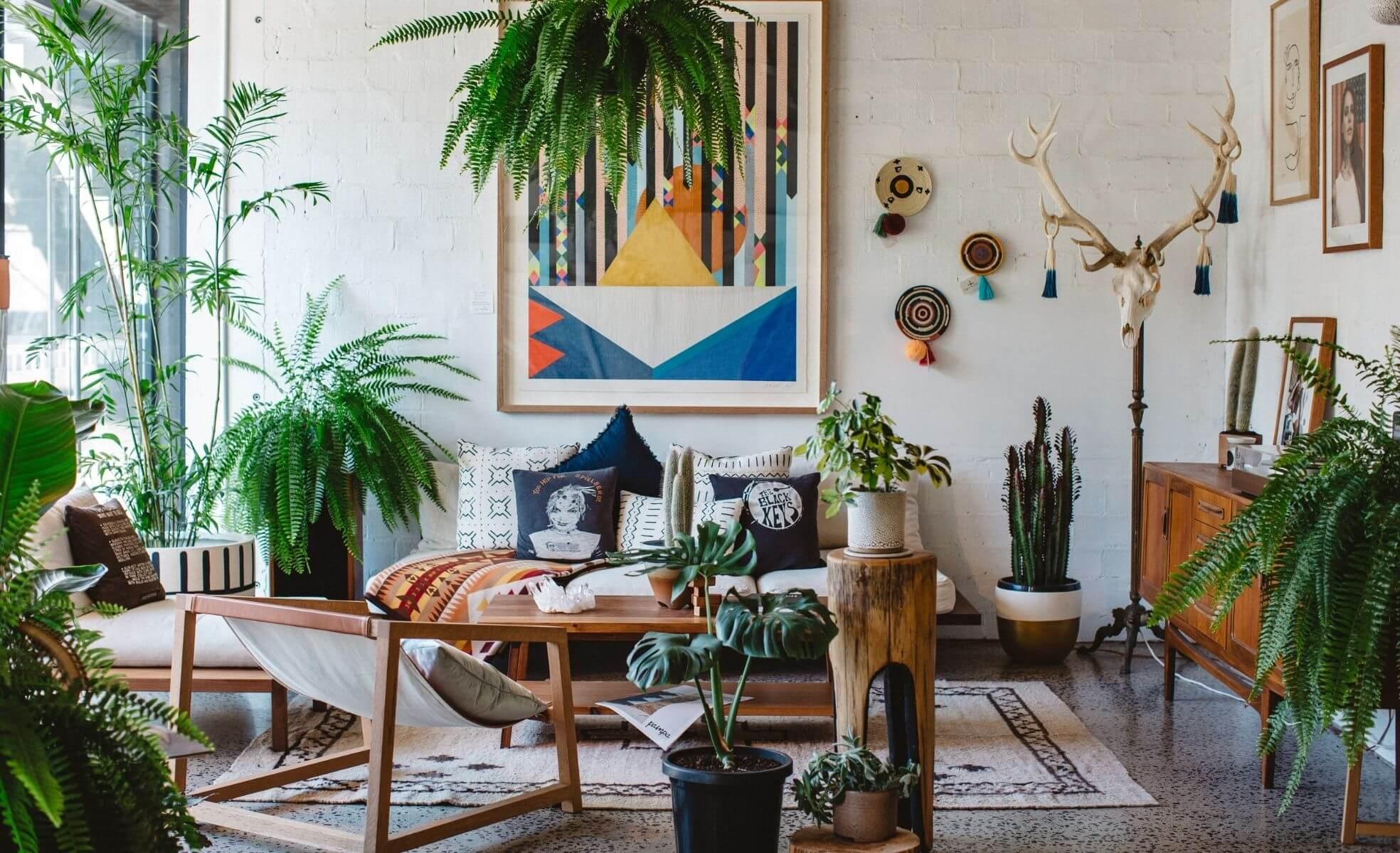 decoração com plantas e cacto na sala