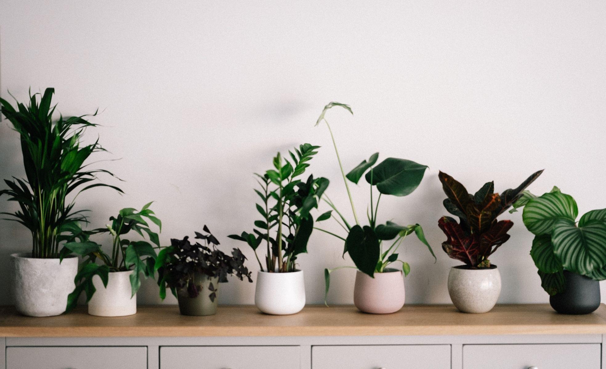 plantas decorativas para urban jungle