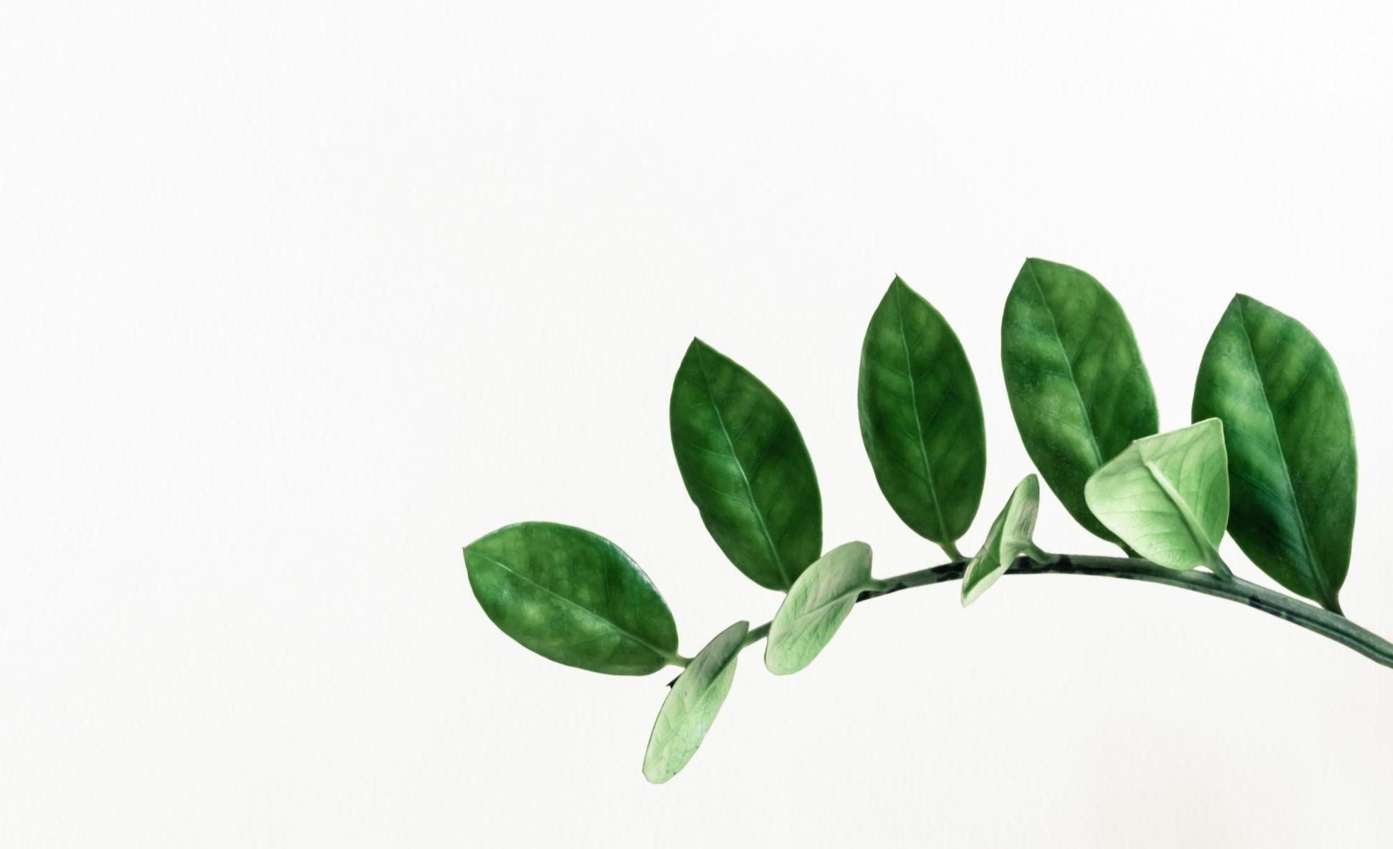 plantas para decorar