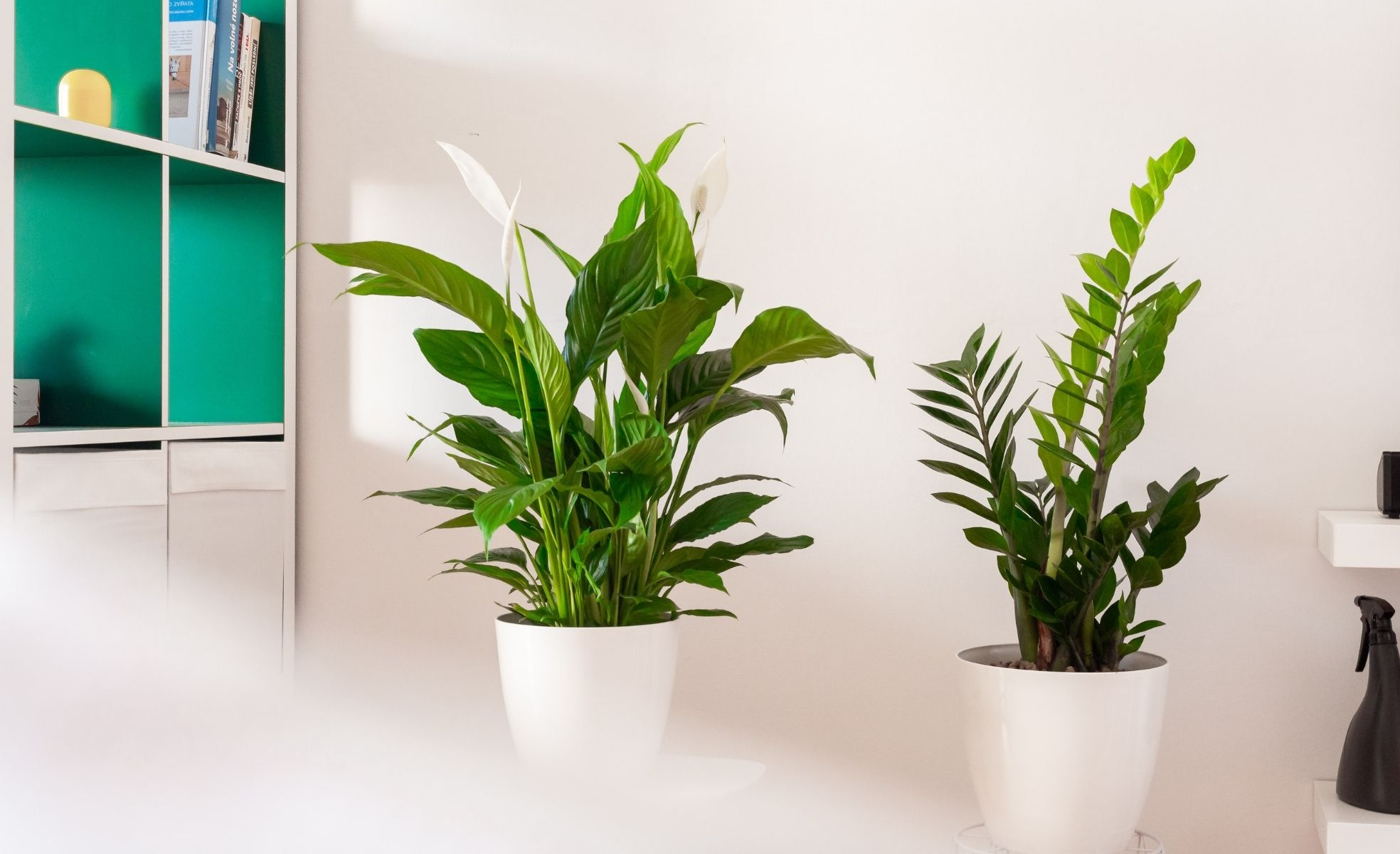 plantas para urban jungle