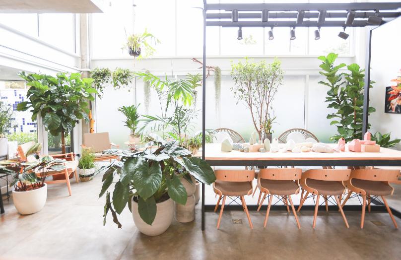 O que você precisa saber antes de ter plantas em casa | Westwing.com.br