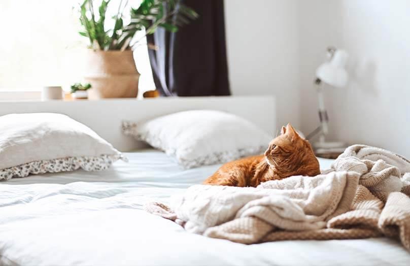 Edredons e travesseiros: descubra como escolher os seus | Westwing.com.br