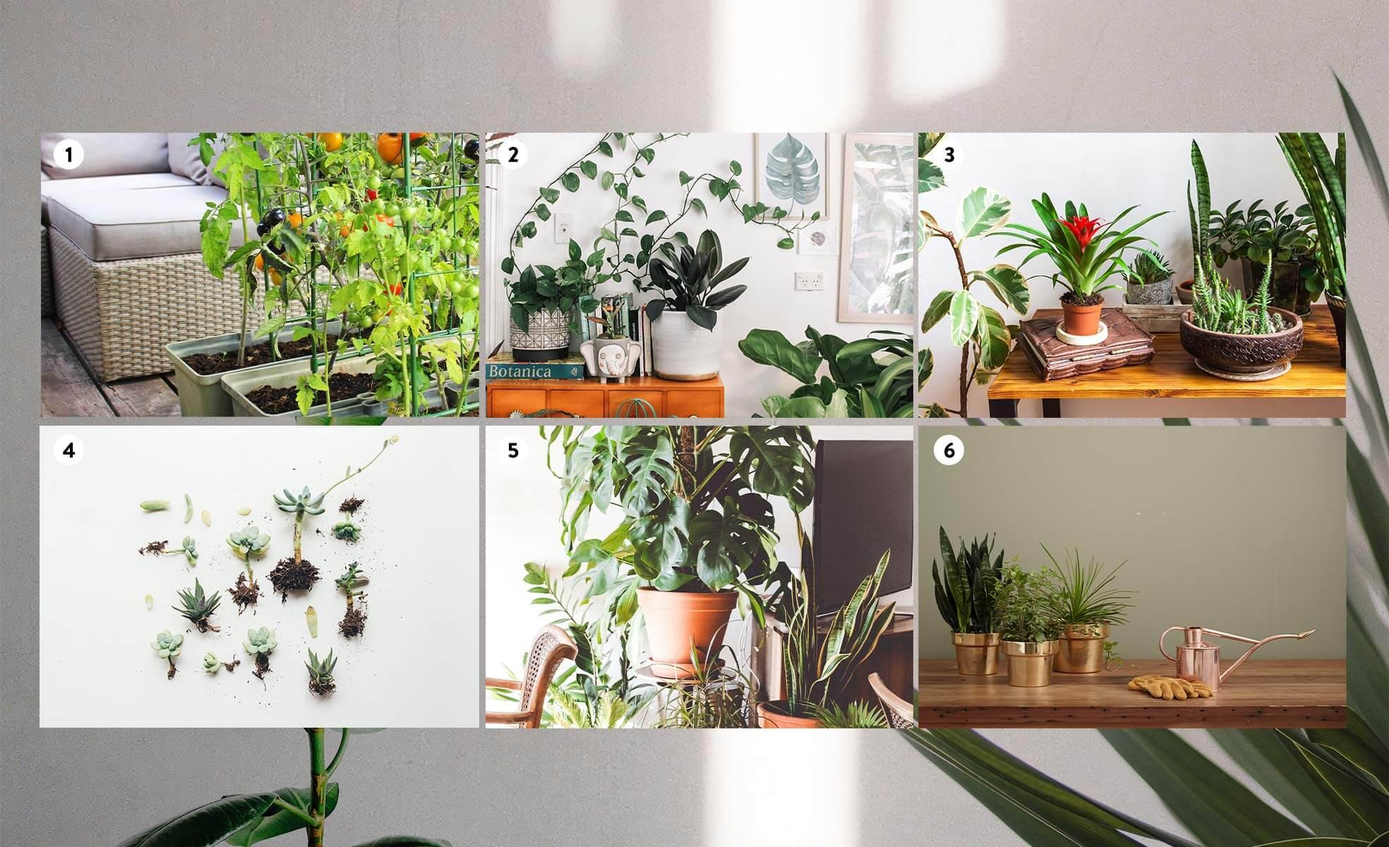 Como escolher plantas ideais | westwing.com.br