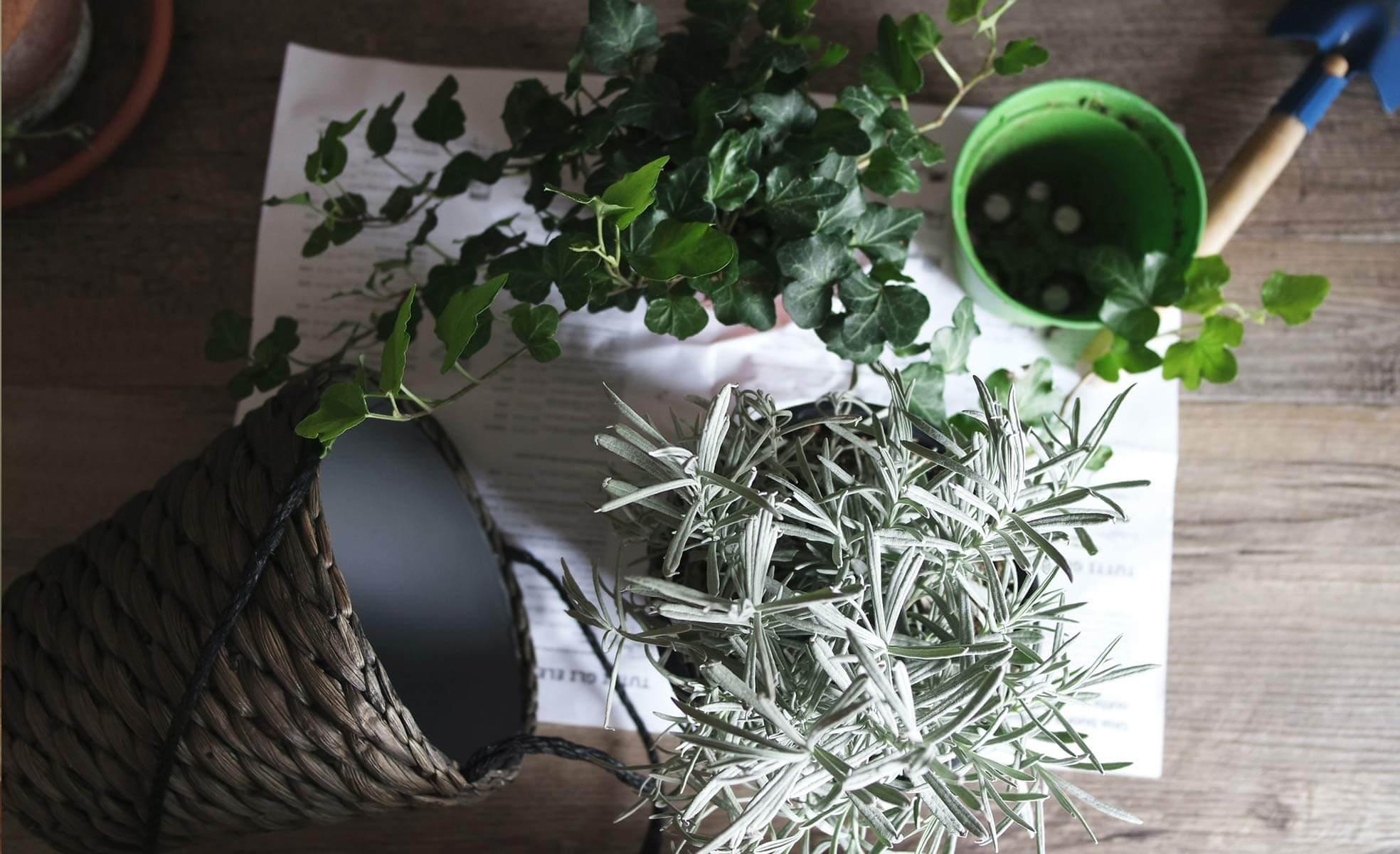 Como cuidar das plantas | westwing.com.br