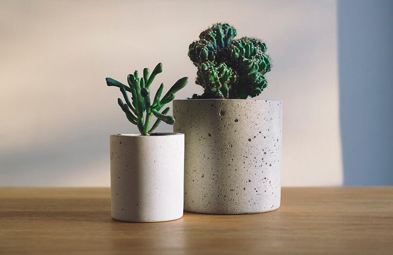 Plantas em casa: tu-do o que você precisa saber! | Westwing.com.br
