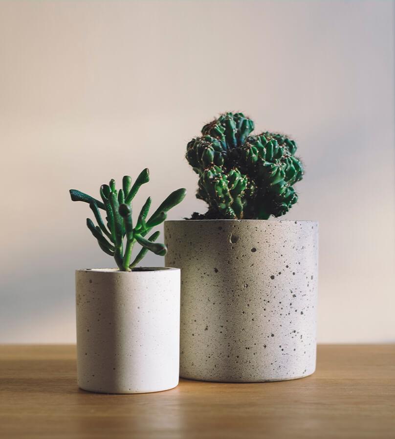 Como regar suculentas? cactos em vasos em concreto | westwing.com.br