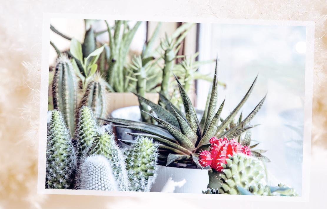 Plantas ideais para a varanda | westwing.com.br