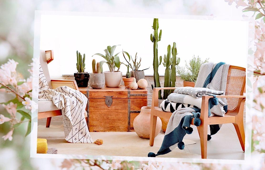 decoração com cadeiras de madeira e cactos