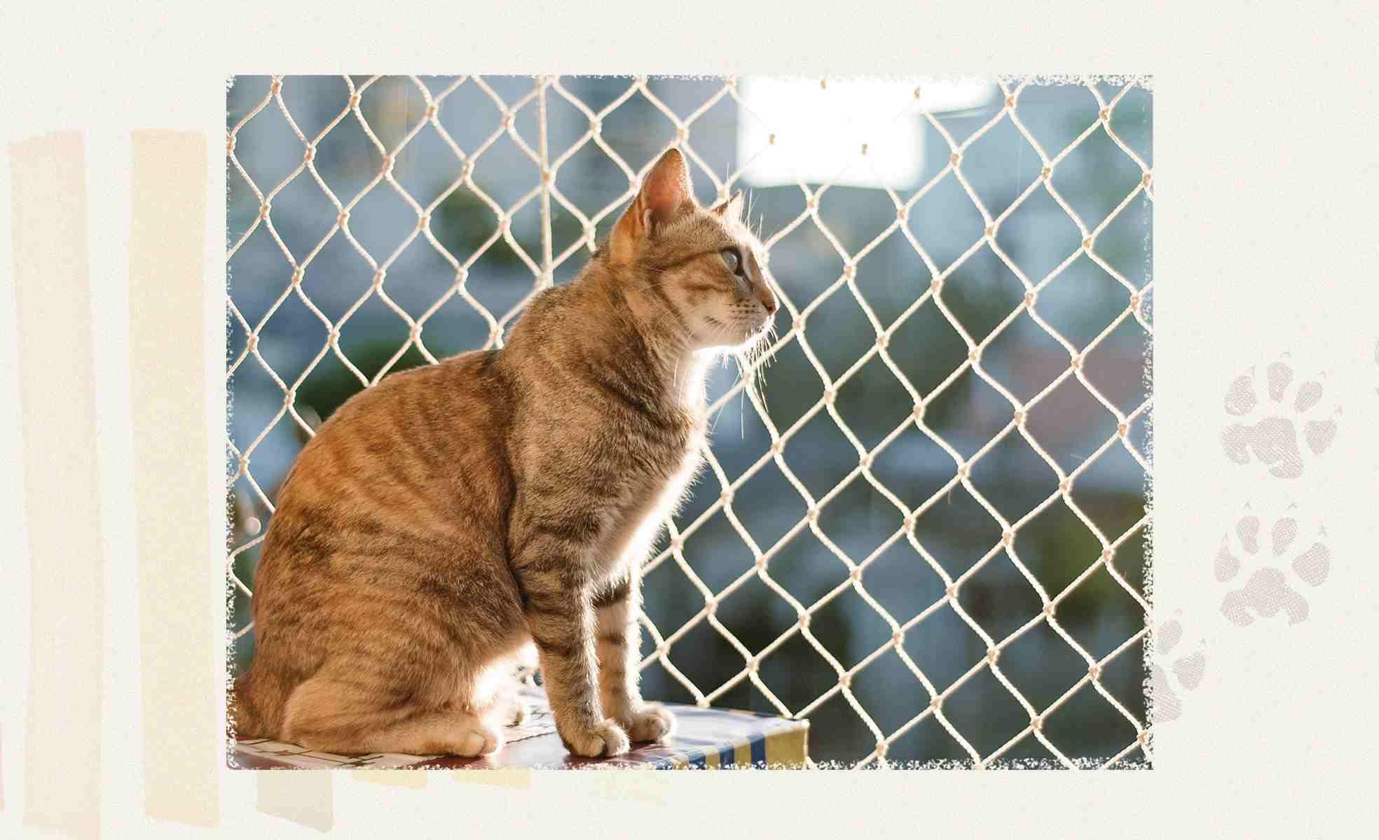 <b>Dicas para preparar o cantinho do pet</b>   Como montar um cantinho para o pet?   Westwing.com.br