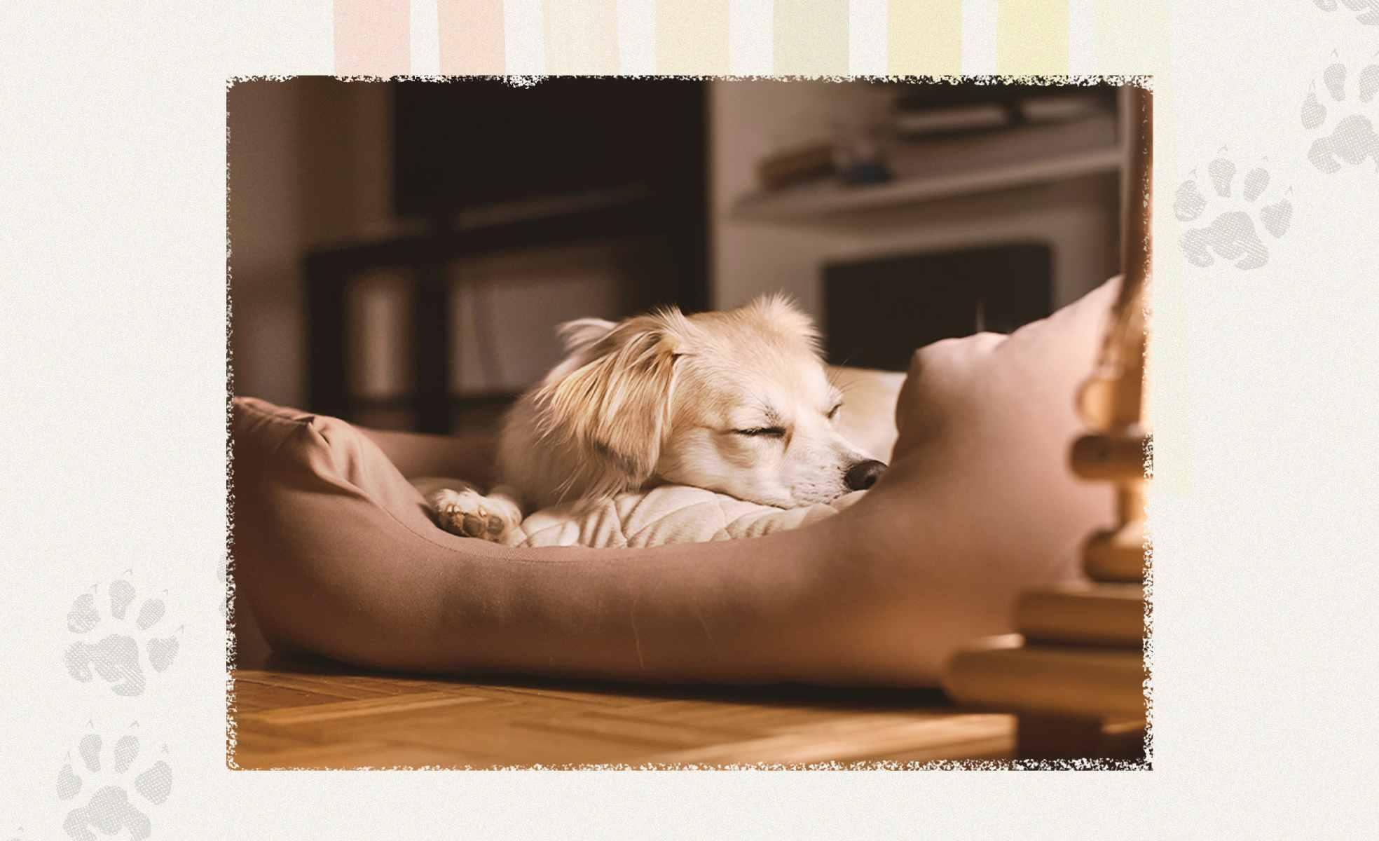 Dicas para montar o cantinho do pet   westwing.com.br