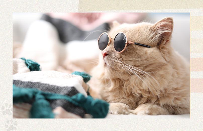Como montar um cantinho para o pet? | Westwing.com.br